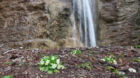 Flowers growing near a waterfall Footage