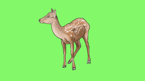 Deer Set 1