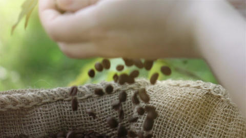 Video of grabbing coffee beans in real slow motion Footage