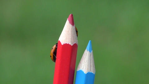 two beautiful luck symbol ladybird ladybug on artist colorful pencil Live Action