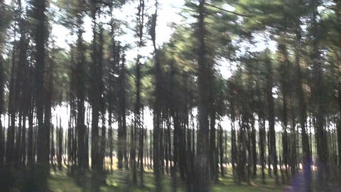 blur speed background. Summer forest from car window 영상물