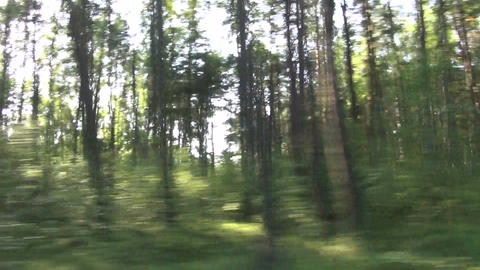 blur speed background. Forest from car window Footage