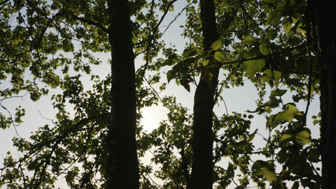 Sun Shining Through the Trees Footage