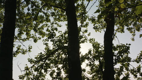 Sun Shining Through the Trees Footage