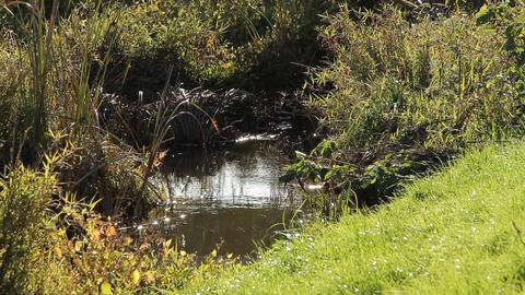 River / Grass / Glistening Water / Stream - Fix Footage