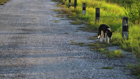 Dog walking alone on the road 画像