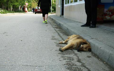 A dog of a shepherd and a pooch asleep on the asphalt フォト