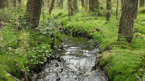 murmur of water in a creek Footage