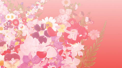blooming flower bouquets, japanese style, red background CG動画