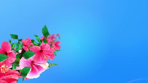 Hibiscus blooming in summer sky 1 CG動画