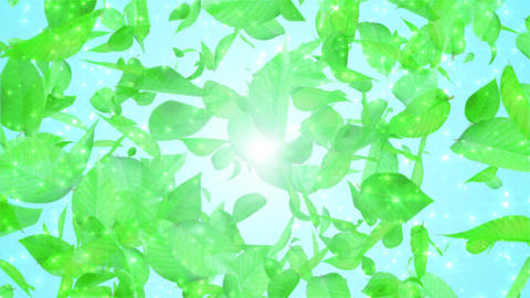fresh green leaves exploding, light blue background CG動画素材