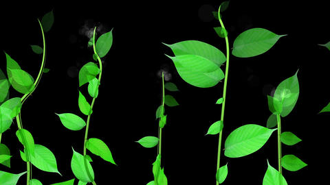 Growing plant image, black background Animation
