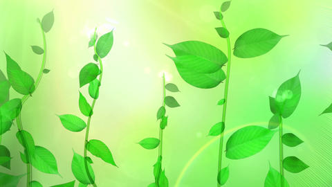 Growing plant image, fresh green background Animation