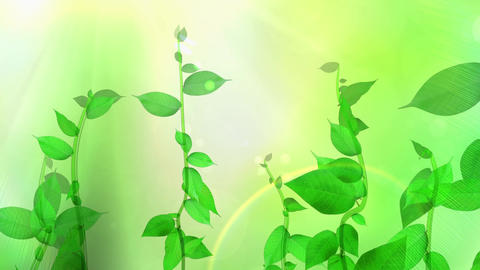 Growing plant image, fresh green background Stock Video Footage