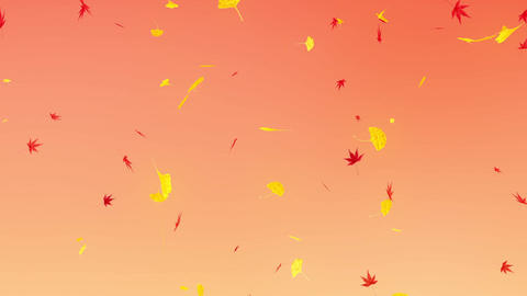 Maple & orange background, ginkgo leaves falling down Animation