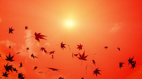 maple leaf scattering in sunset sky 2 Animation