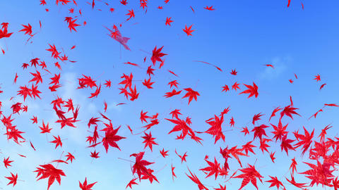 maple leaf scattering in blue sky CG動画