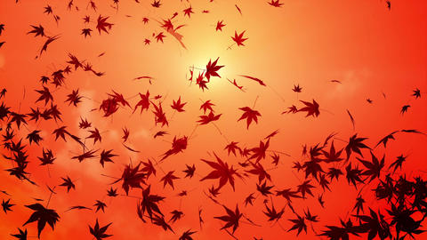 maple leaf scattering in sunset sky Animation