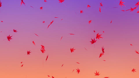 Maple leaves falling down, purple background Animation