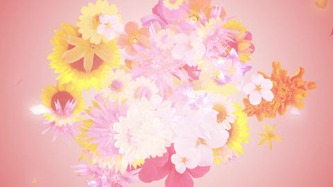 Bouquet image, pink background 2 Animation