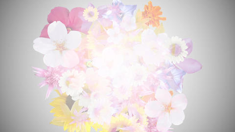 Bouquet image, gray background 1 CG動画