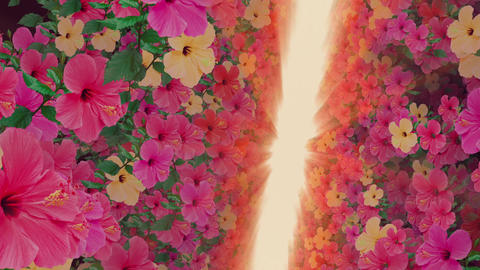 passage where a lot of flowers bloom, orange light, floating Animación