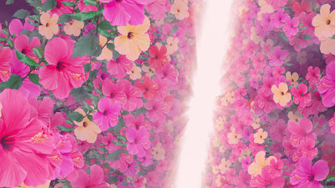 passage where a lot of flowers bloom pink light, floating 애니메이션