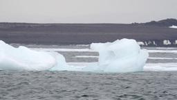 Floating Iceberg in the sea Footage