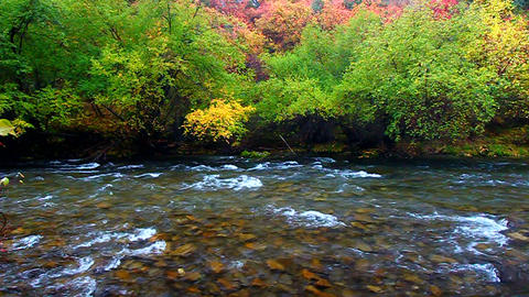 Cache River Utah Fall Scenery Footage
