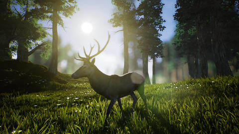 Lonely Deer 1 Animation