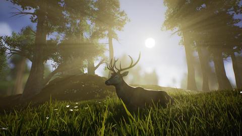 Lonely Deer 2 Stock Video Footage
