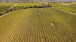 Casual Aerial Orbit In A Sonoma, California Vineyard Footage