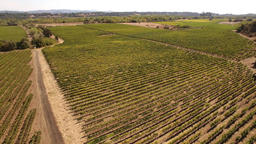 Aerial Reverse Reveal Shot In A Sonoma Valley Autumn Vineyard Footage