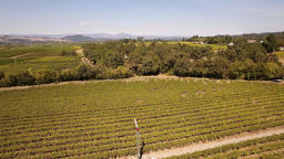 Aerial Footage Of A Sonoma Valley Autumn Vineyard ビデオ