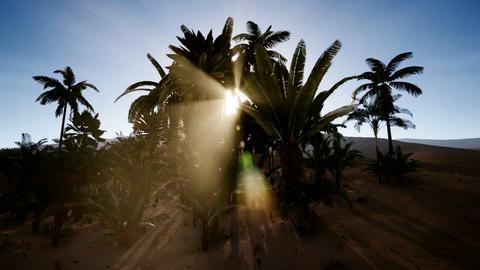 the amazing Erg chebbi dunes in the sahara desert, morocco Footage