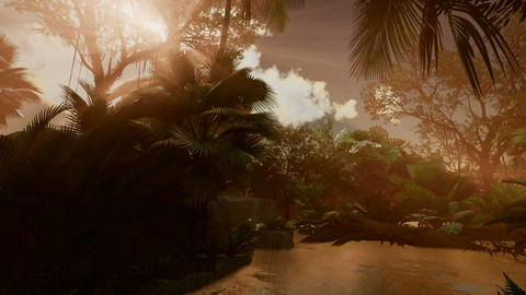 Sunset beams through Palm Trees at jungle rainforest Footage