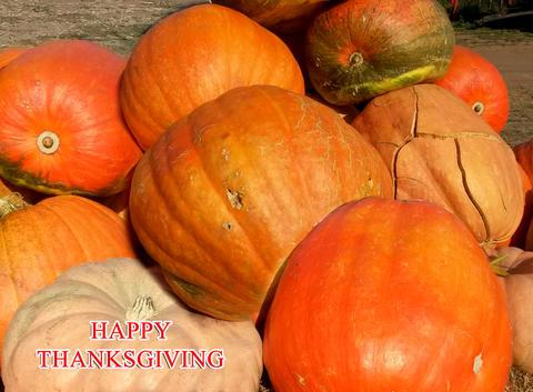 Happy Thanksgiving. Large orange pumpkins for thanksgiving Photo