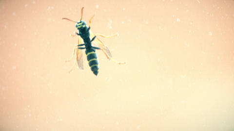 Macro shot of a wasp crawling on window glass Footage