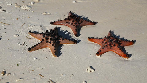 starfish in the beach sand Footage