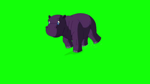 Little Violet Hippo Emerges from the Water Chroma Animation