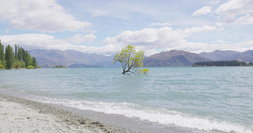 Wanaka New Zealand lone tree of Lake Wanaka famous tourist attraction Footage
