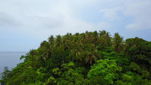 Fly over palms and forest canopy of small tropical island Footage