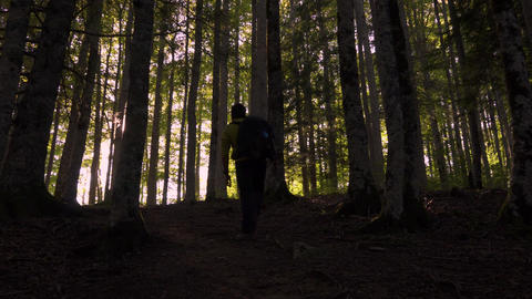 Man entering the forest Nature 영상물
