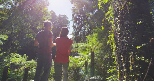 Hiking people in New Zealand swamp forest taking pictures in Ship Creek Footage