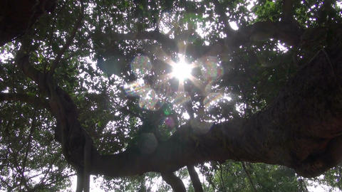 sunlight and camera motion in banyan tree leaves – Auroville, India Footage