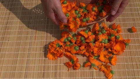 fresh medical calendula marigold herb flowers on table Footage