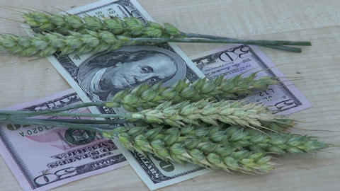 agriculture business concept – wheat ears and dollars Footage