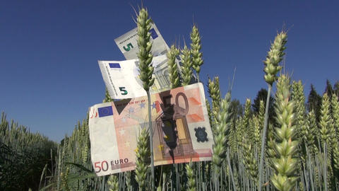 euro banknotes on wheat ears – agriculture business concept Footage