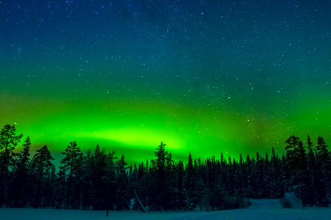 Bright Northern Lights above the Winter Forest Photo