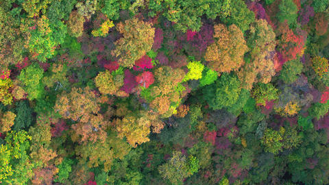 Aerial video of the mountain that is colored by autumn leaves. track-down 영상물